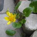 写真: 根性花
