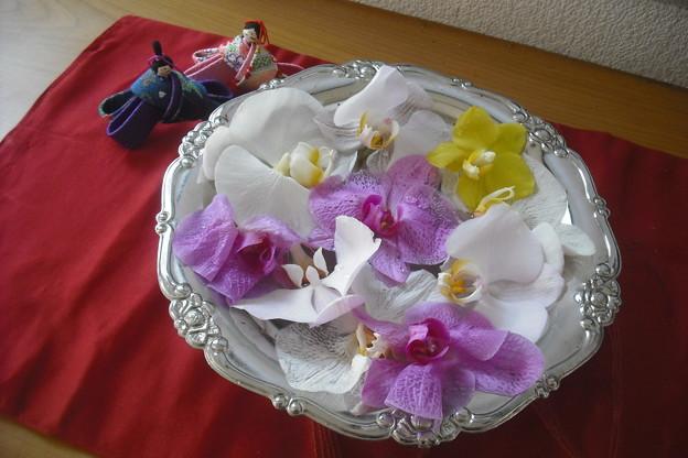 コチョウランの花びら