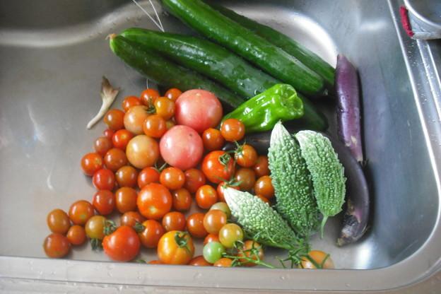 今日の収穫量