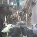 写真: 鈴虫 2