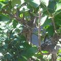 写真: 巣が空っぽ