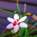 写真: ひっそりと咲く・・