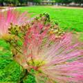 写真: 公園に咲く・・・