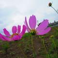 写真: 咲き出しましたね~