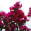 写真: 咲き出しましたね~パート2