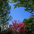 写真: 空を見上げて・・
