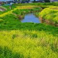 写真: 河川敷の春