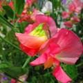 なんて言う花、かわいいな~