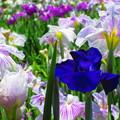美しく咲き誇る・・・