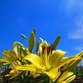 写真: 青空に向かって・・