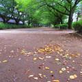 写真: 初秋が待ち遠しい~