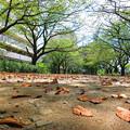 写真: 初秋の候