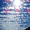 写真: お~なんて雲だ~
