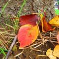 写真: 小さな秋・・