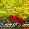 公園の秋・・
