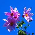 写真: 青空を背景に・・