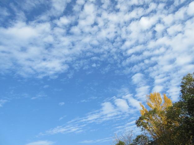 秋の空を・・