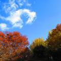 写真: 晩秋の空