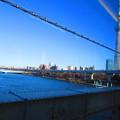写真: 陸橋よりツリーを見る。