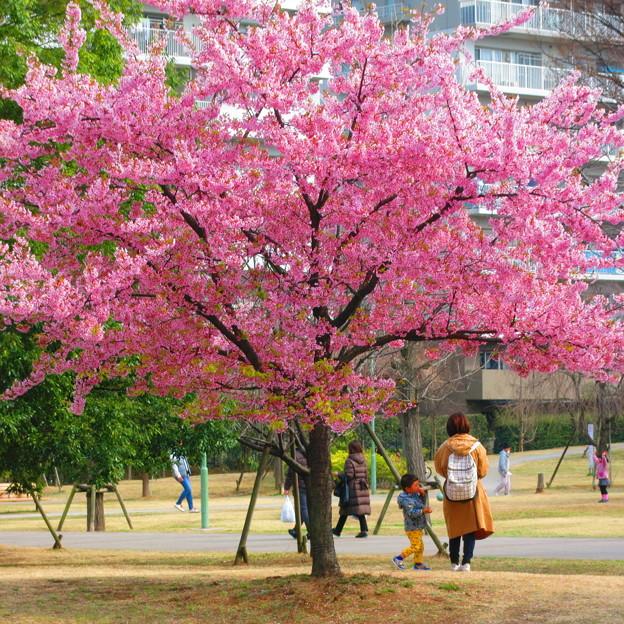 Photos: 公園の一画にて