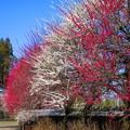 Photos: 青空に赤と白・・