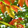 秋色・・・
