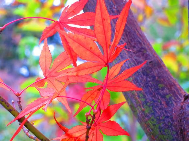 残り秋・・