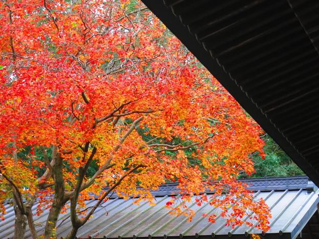 境内の片隅から晩秋を・・