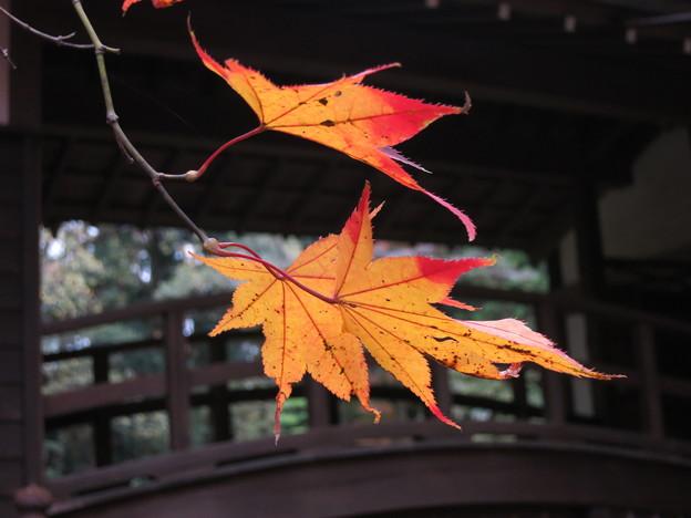 太鼓橋の秋