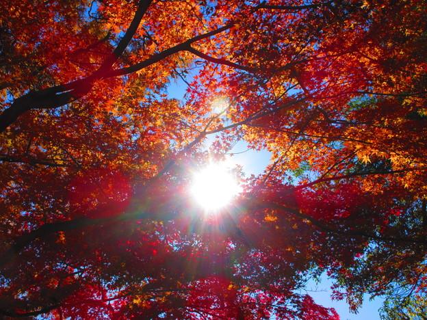 見上げてみれば・・残り秋