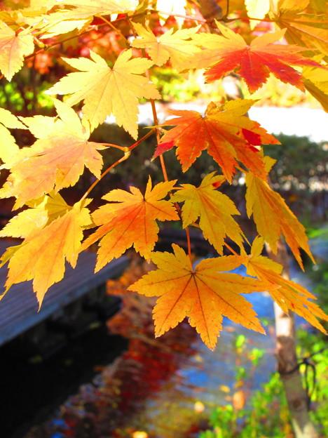 優しい秋色・・