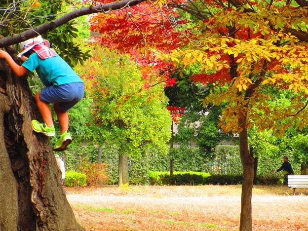 懐かしい木登り・・・