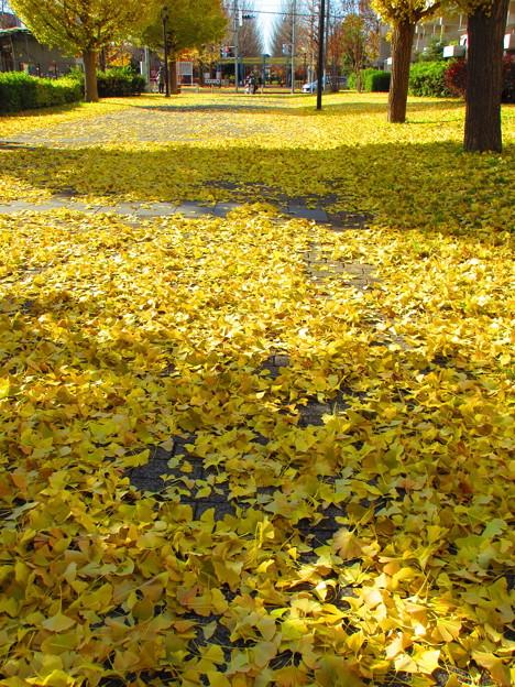 黄金の絨毯・・・