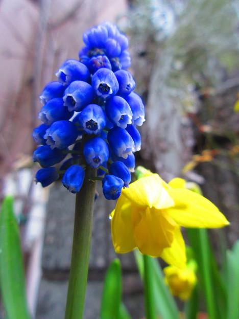 春の目覚め・・