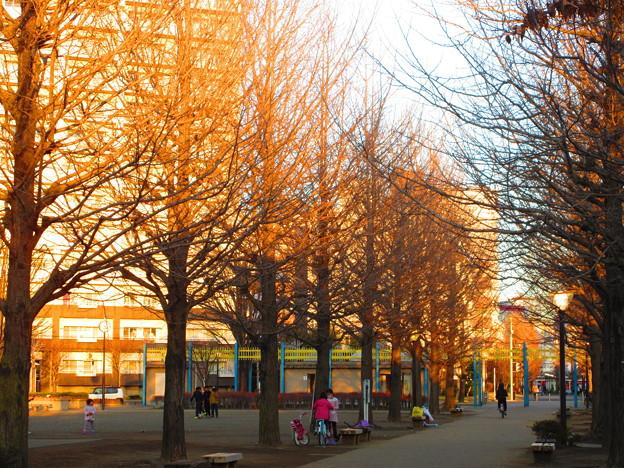 黄昏時の公園
