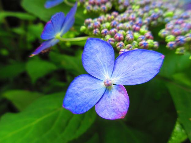 美しきかな花弁