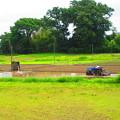 川辺の田園