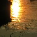 黄昏の陽・・・