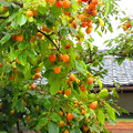 Photos: 秋色にちかずいて・・