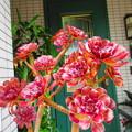 Photos: 玄関にきれい!