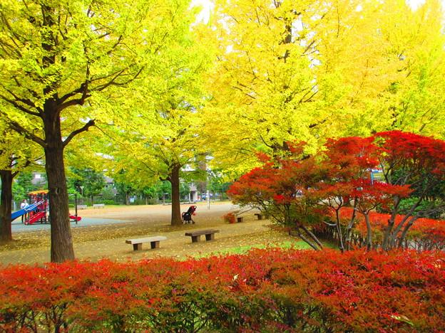 休日の秋色、朝撮り・・