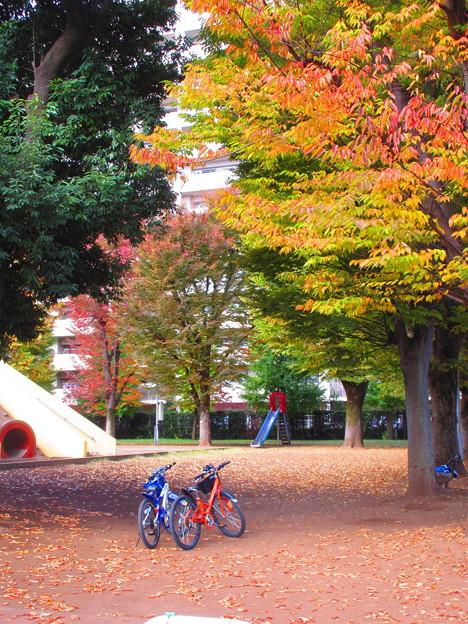 秋色自転車