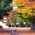 Photos: 秋色自転車