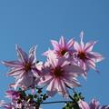Photos: 青空に輝いて・・