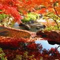 秋色に染まる・・