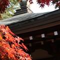 多福寺の秋