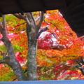 Photos: 秋の装い