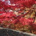 Photos: もえる秋色
