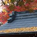 Photos: 枯れ葉散る