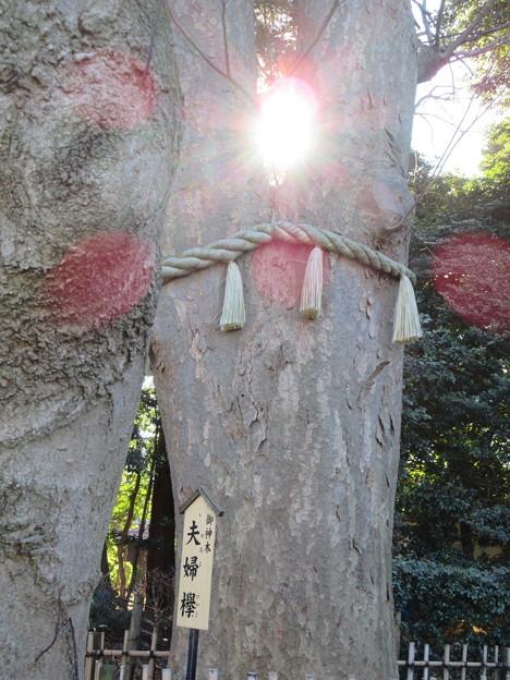 御神木の陽・・